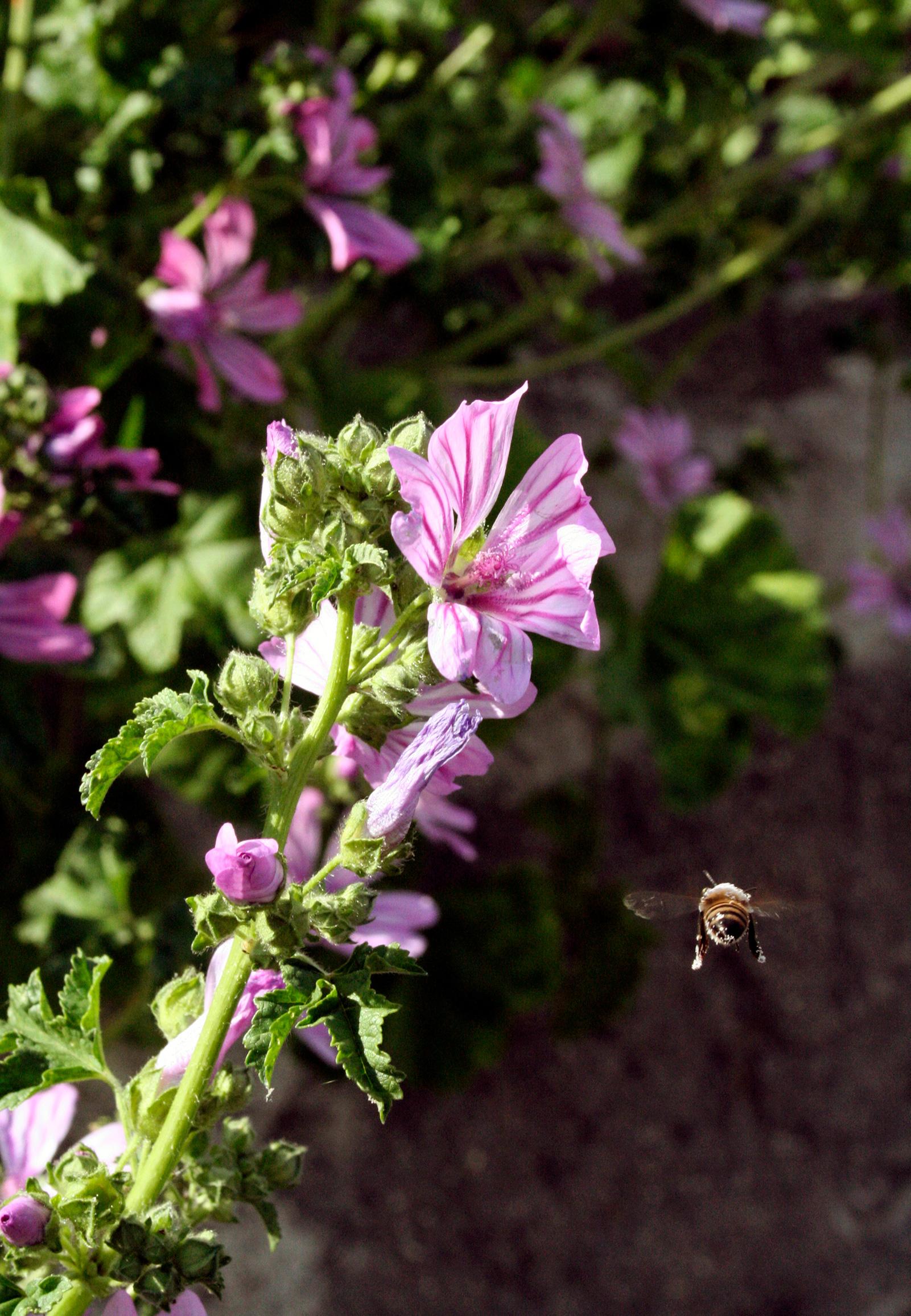 Photogenic Bees